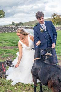 Alpaca-wedding-photography