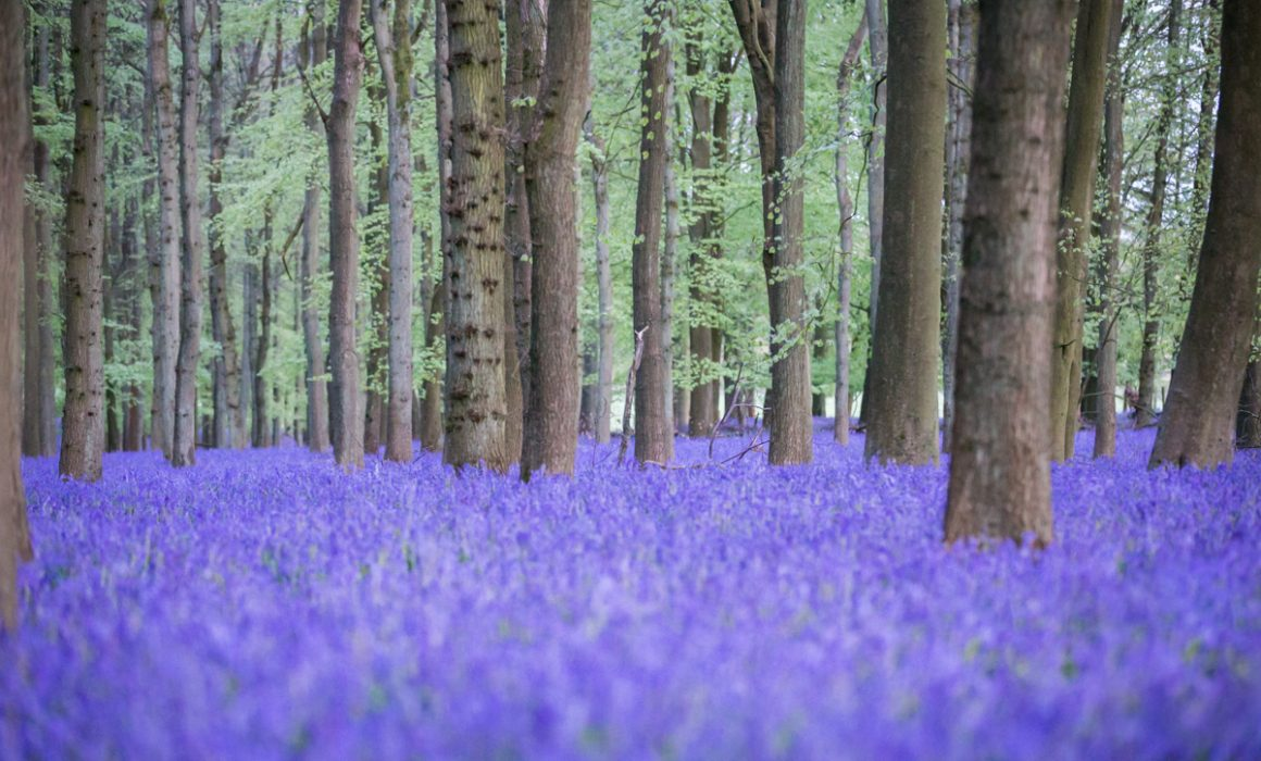 Bluebells photoshoot